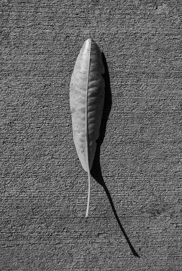 IMG_8913-leaf-for-website