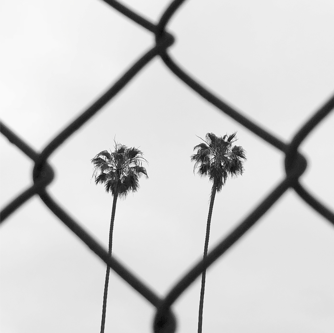 _palm-and-fencephoto-