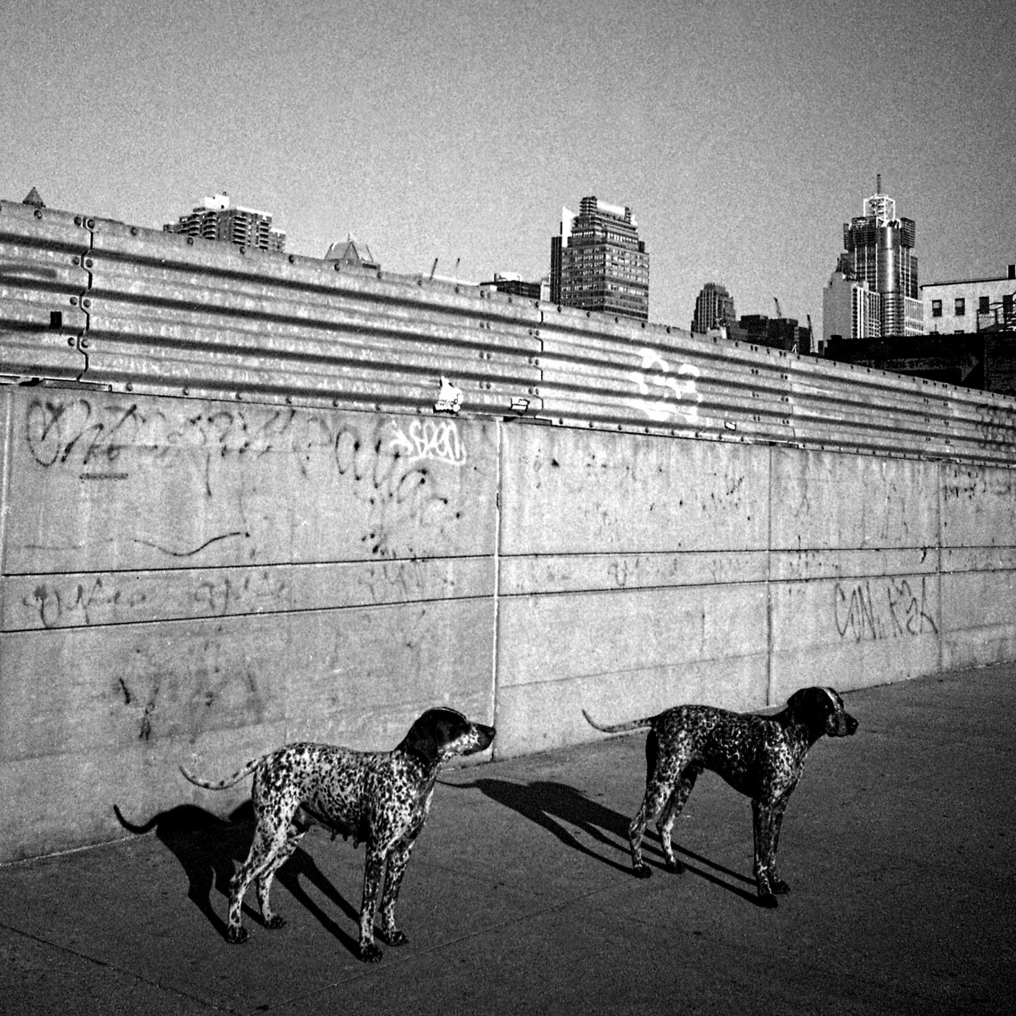 dogs-New-York-City-for-website